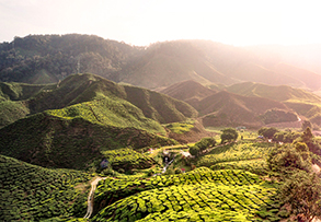 CAMERON HIGHLANDS I.