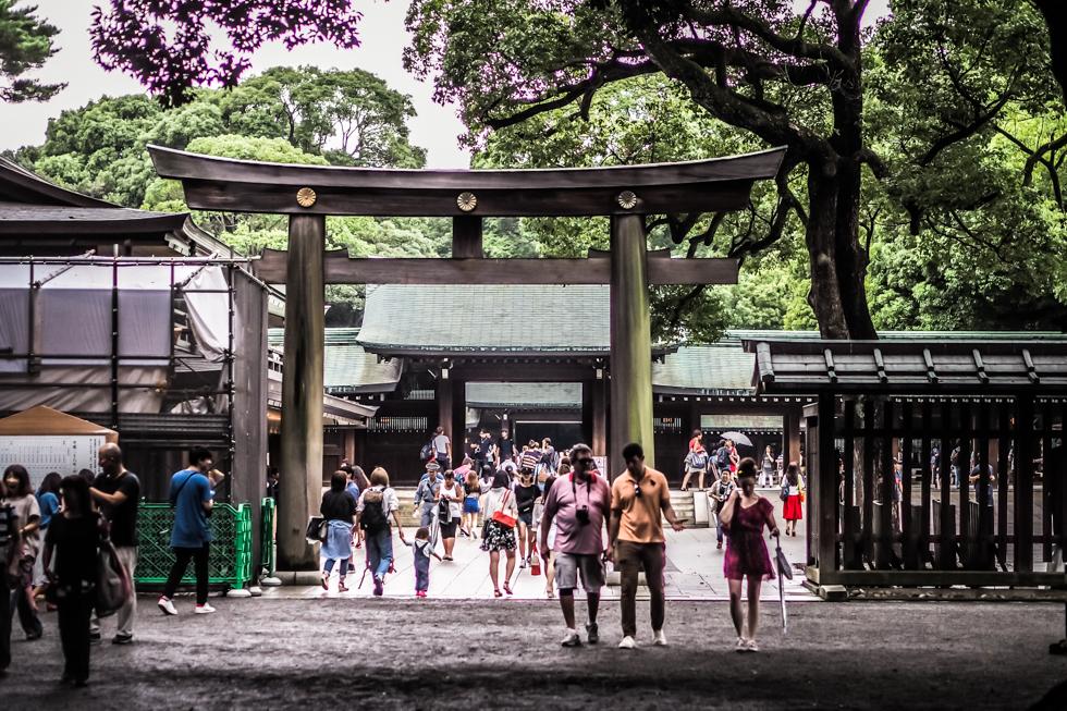 harajuku, meiji-jingu, tokyo, japan, japonsko, tokio