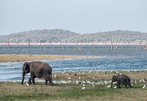 KAUDULLA NATIONAL PARK, SRÍ LANKA