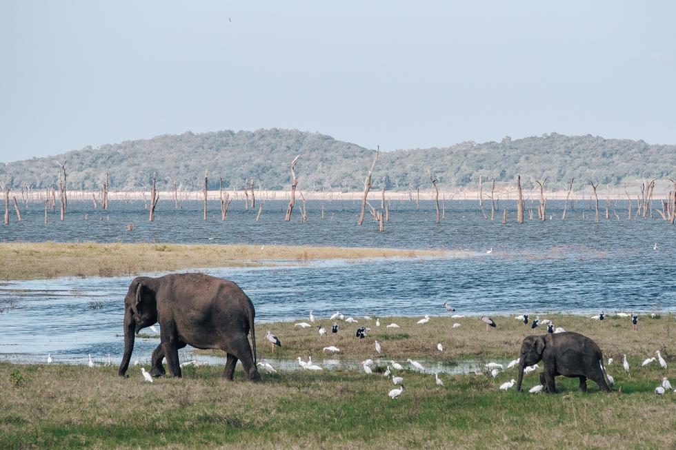 pajuska-na-cestach-kaudulla-srilanka