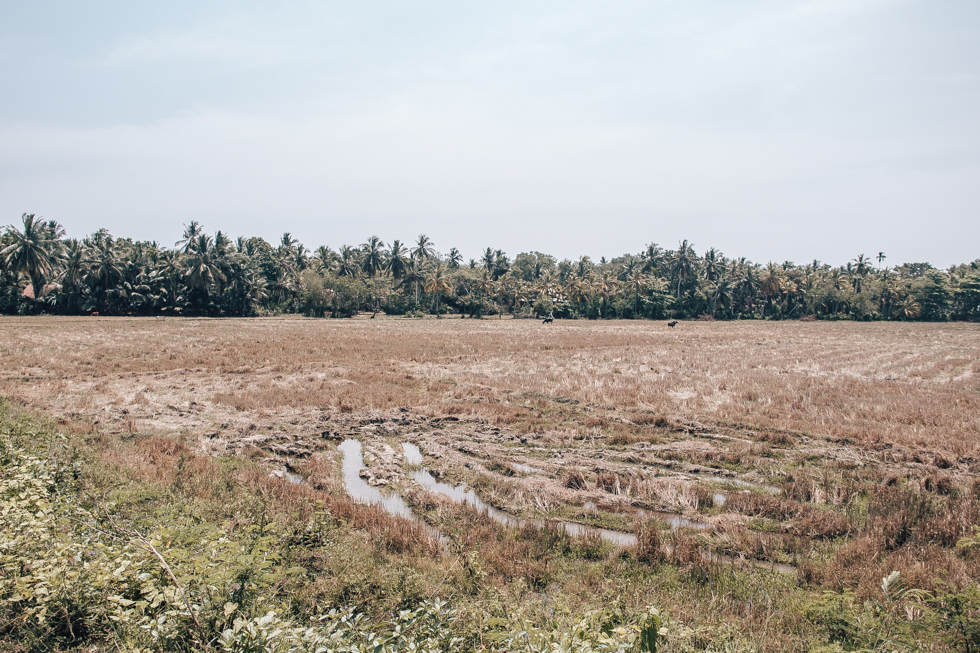 pajuska-na-cestach-srilanka